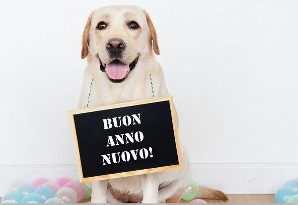Capodanno con il cane, dove andare e cosa fare